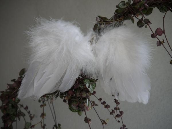 änglavingar vita fjädrar