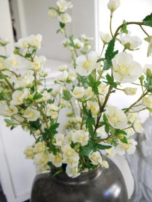 Malva vit konstväxt. Besök Blickfång.se