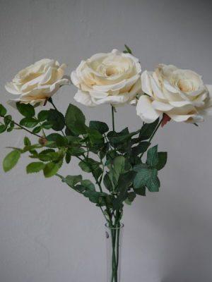 Naturtrogen stor krämfärgad ros på en lång stjälk