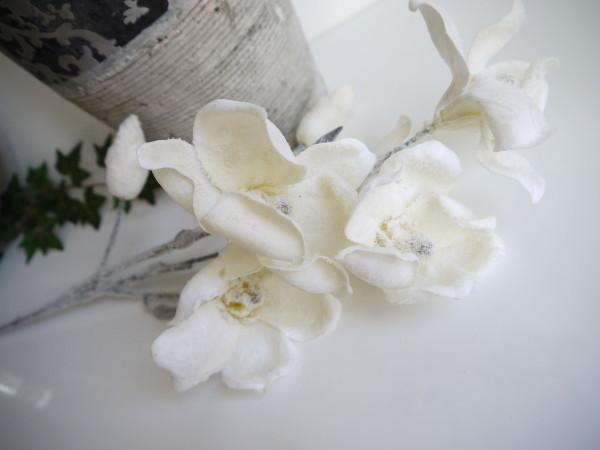 magnolia frost