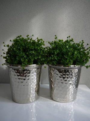Cucullata konstgjord gron vaxt