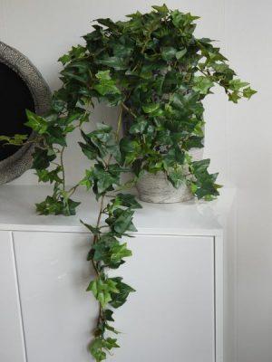 Hängande naturtrogen murgröna med mörka blad