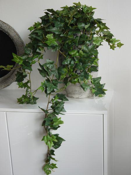 naturtrogen murgröna