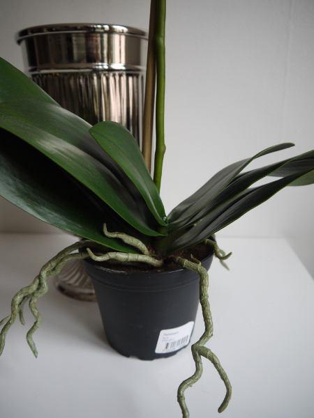 orkide-i-kruka