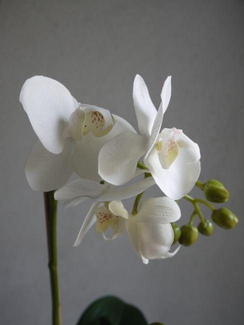 orkide vit i kruka