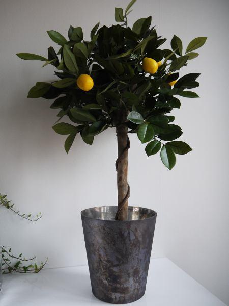 Konstgjord citrontrad