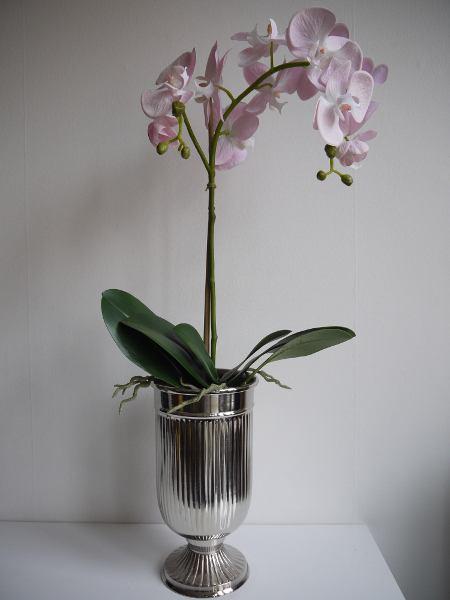 rosa-orkide