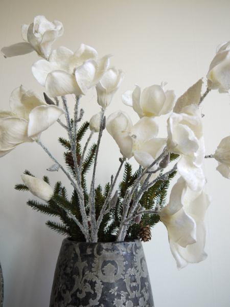 vit magnolia