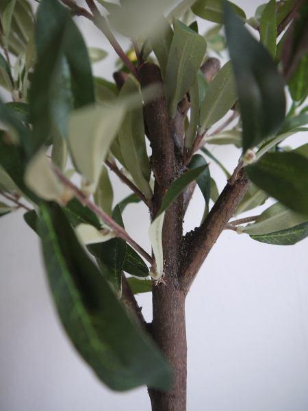 naturtrogen olivträd
