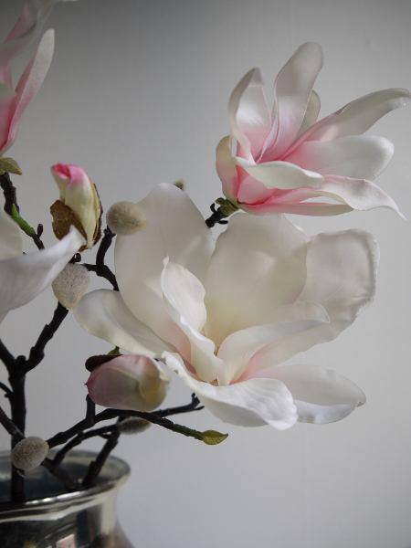 magnolia-rosa