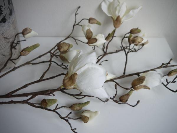 magnolia-vit