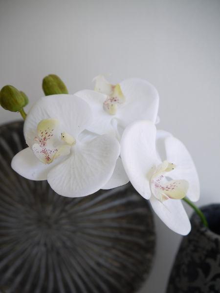 orkide-snitt