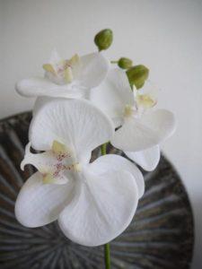 Naturtrogen vit orkide snittblomma