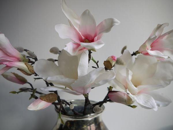 rosa-magnolia