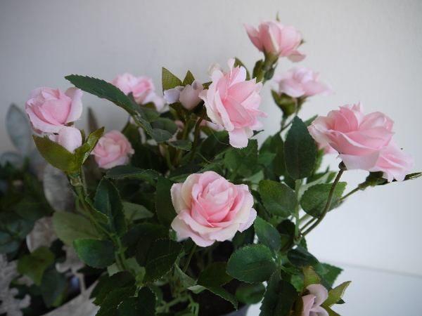 rosa-ros-innrekruka