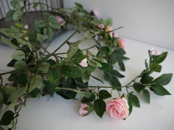 rosgirlang-rosa