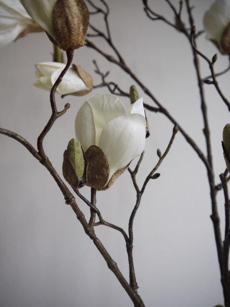 vit-magnolia
