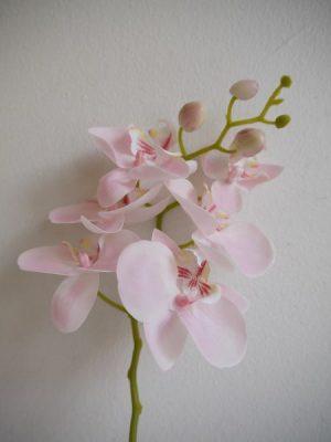 Naturtrogen konstgjord orkide på stjälk