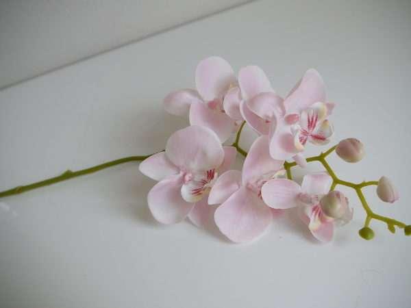 rosa-orkide-snitt