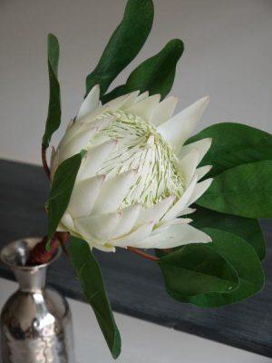 Konstgjord vit protea blomma på stjälk