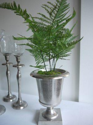 Plumosus grön konstgjord växt