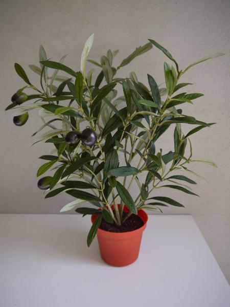 P1150561-olivbuske