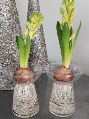 Hyacintvas i glas