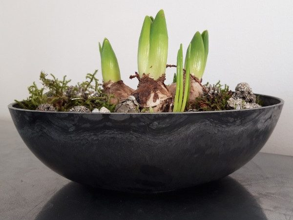 planteringsskal2