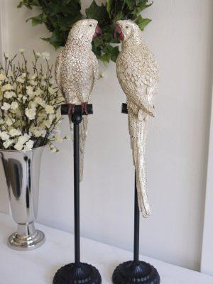 Papegoja på stativ