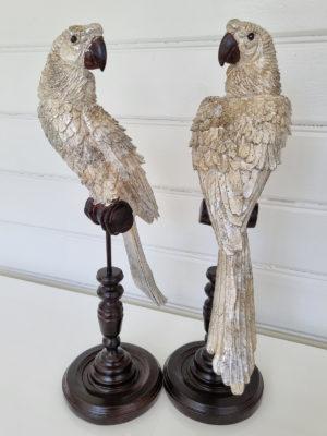 Papegoja på stativ. Besök Blickfång.se
